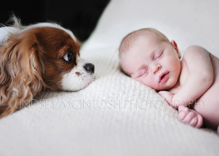 Newborn and dog pictures google search