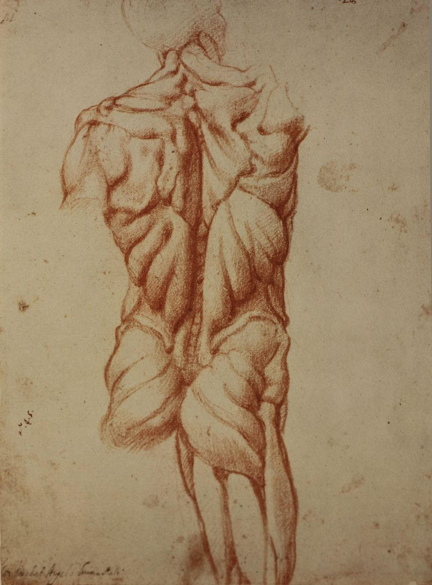 Anatomy in the Renaissance – The Human Scaffold