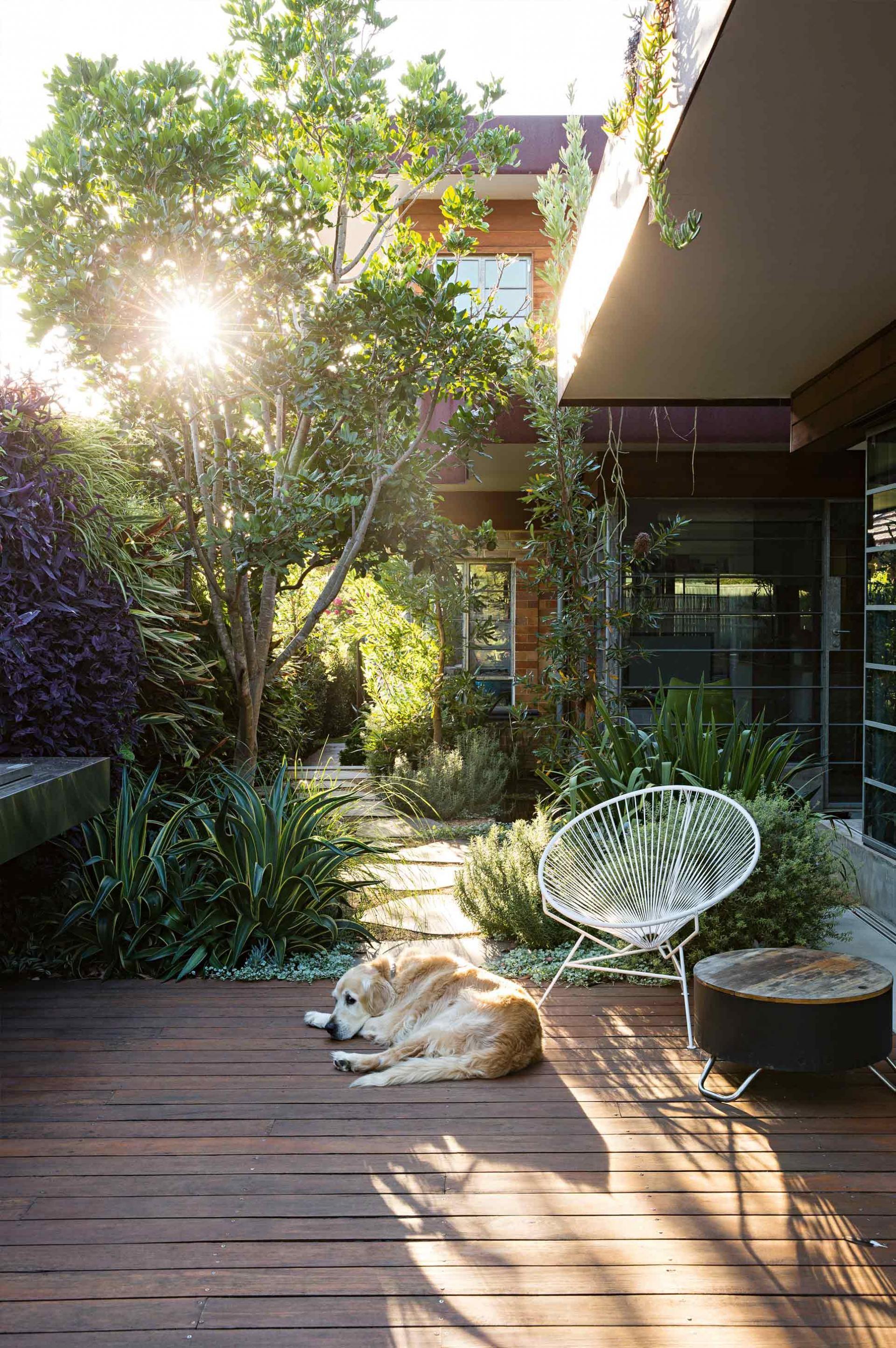 Deck dog courtyard garden peter fudge july15 garden for Courtyard landscaping