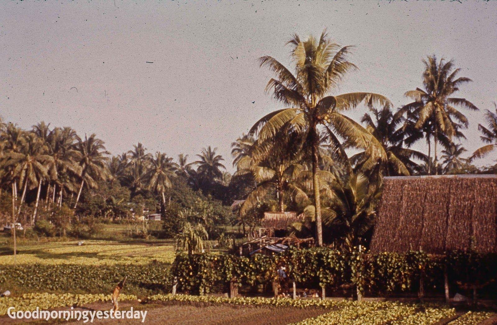 c1961. kampong in Lorong Chuan in 2020 Show me photos