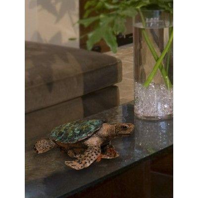 Decorative Cremation Urns Fascinating Cremation Urns  Bronze Ocean Sea Turtle  Nate  Pinterest 2018