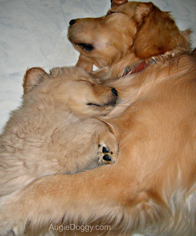 From The Treat Jar Blog Golden Retriever Dogs Golden Retriever Cute Dog Pictures