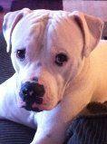 this is my dog dauber isn't he cute?