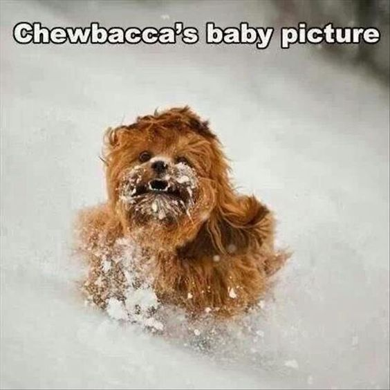 13 Funny Star Wars Pictures For Today Chewbacca Star Wars Meme Mizah