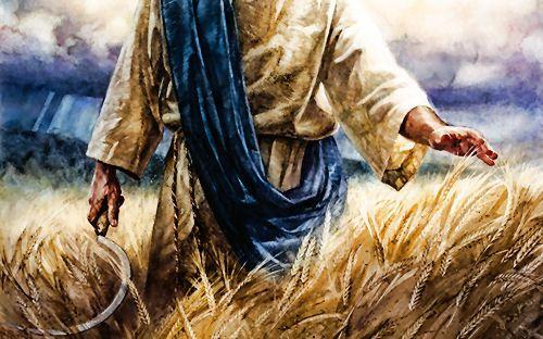 Harvest - prophetic art | Prophetic art, Prophetic painting, Biblical art