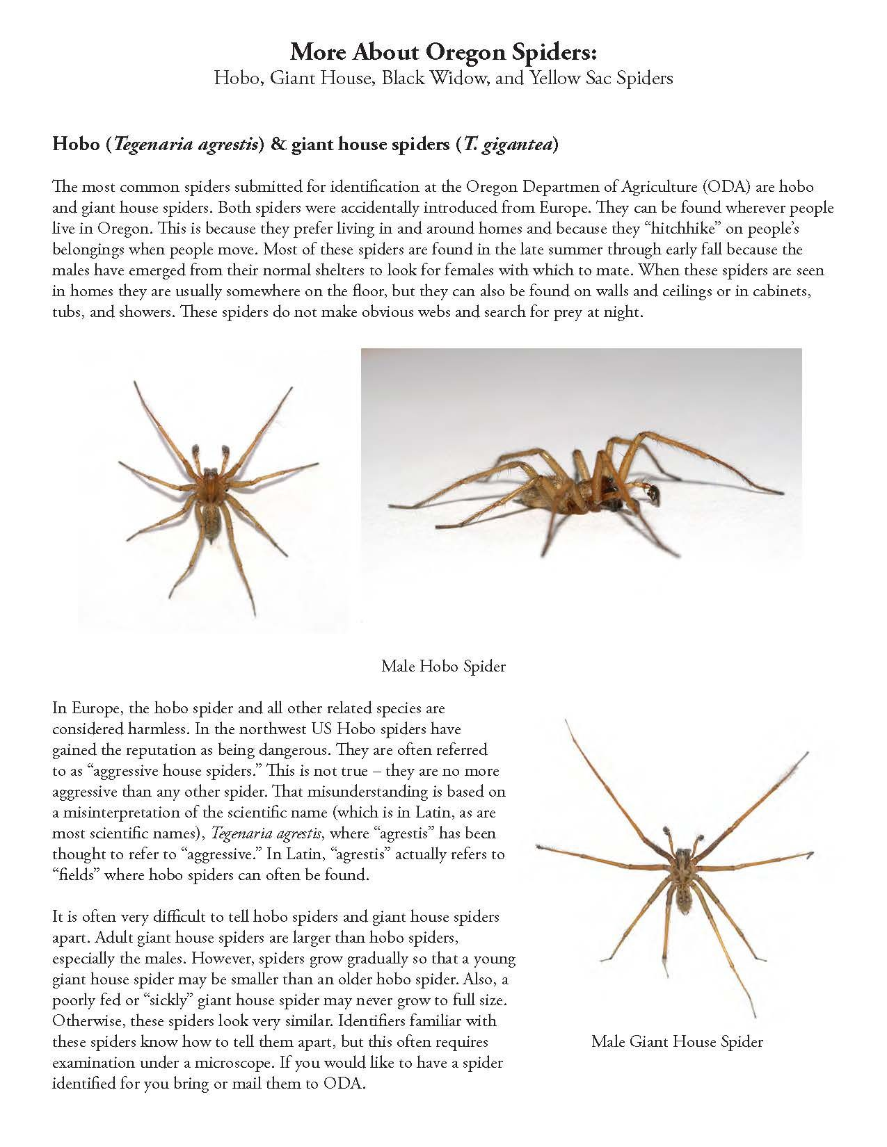 More About Oregon Spiders Hobo, Giant House, Black Widow, And