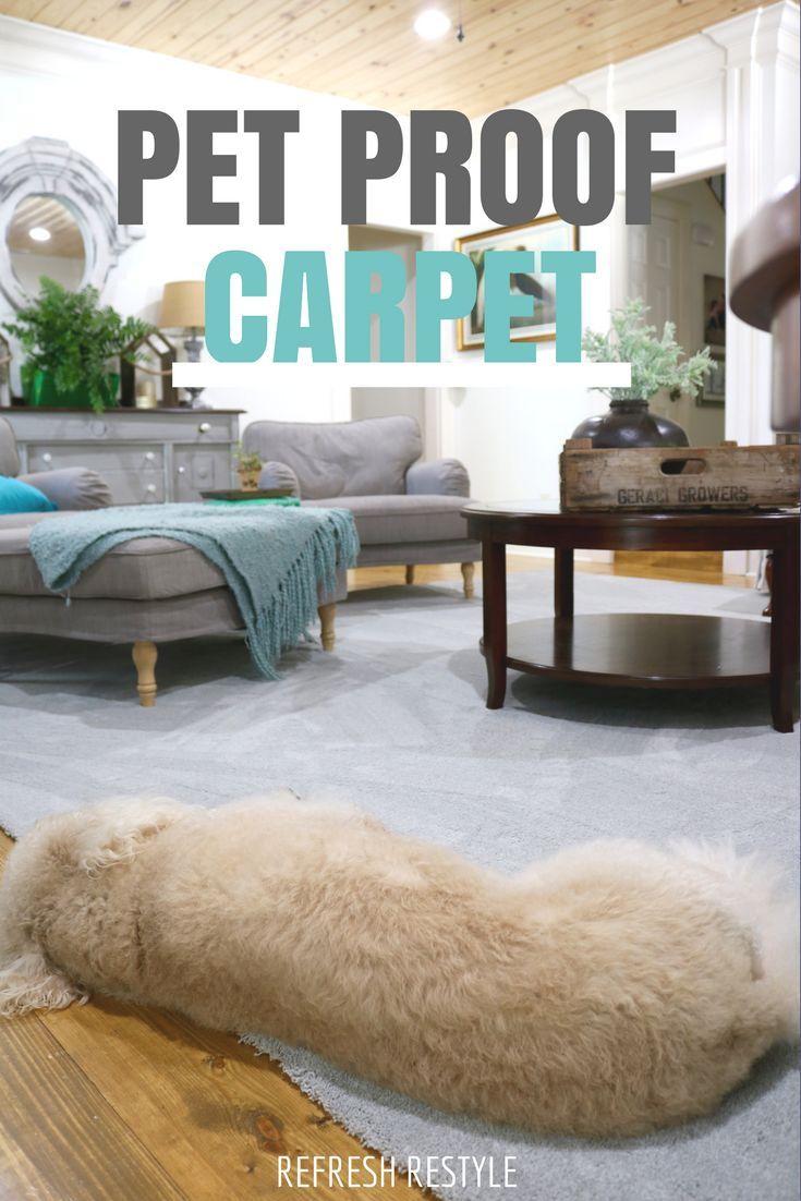 Pet friendly carpet makes life easier home depot carpet