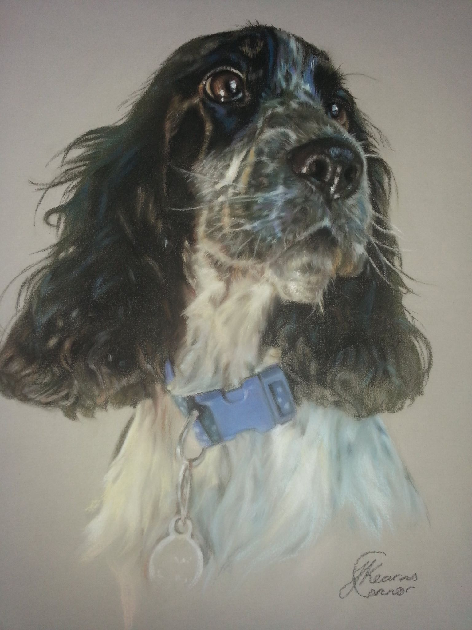 My Dog Ginny Blue Roan Cocker Spaniel Painted In Pastels