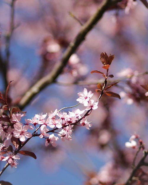 Exploring Paris Spring Photography Nature Beautiful Photography Nature Nature Photography
