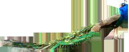تحميل تصاميم فيكتور Eps جاهزة للتعديل بالاليستريتور الإبداع للتصميم والمونتاج Logo Design Design Creative Logo