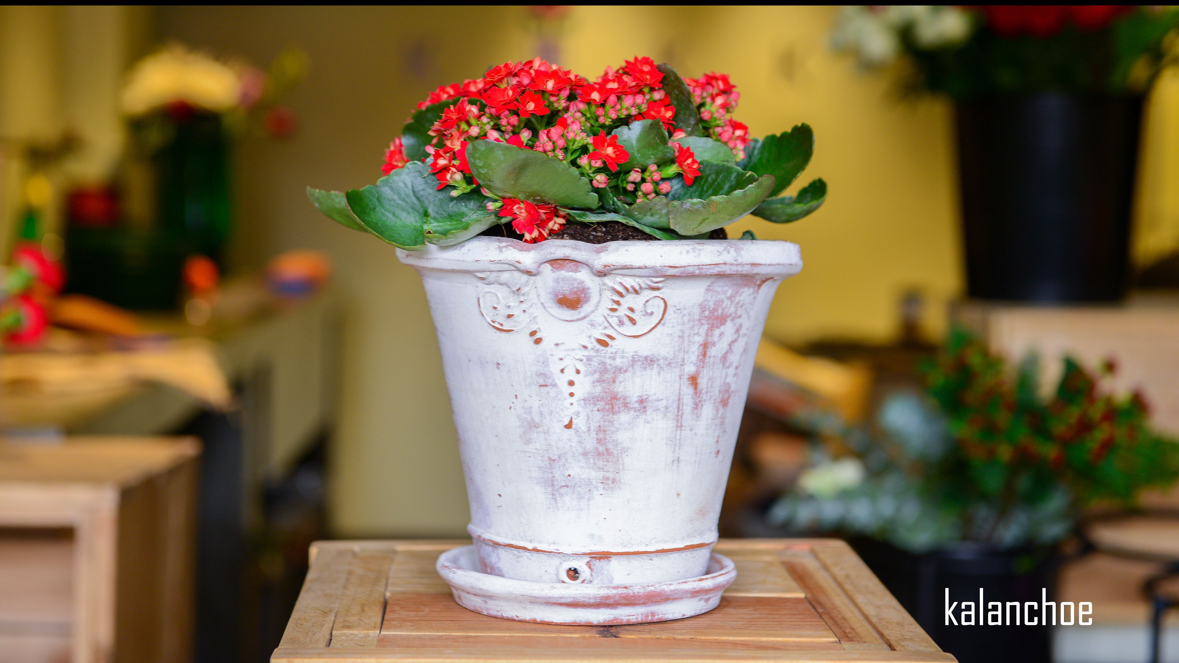 #plantas #macetas #barro #artesanal #mx #floreria #kalanchoe