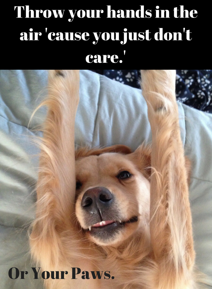 Best Dog Tweets Of All Time Cute Funny Animals Animals Doing Funny Things Hands In The Air