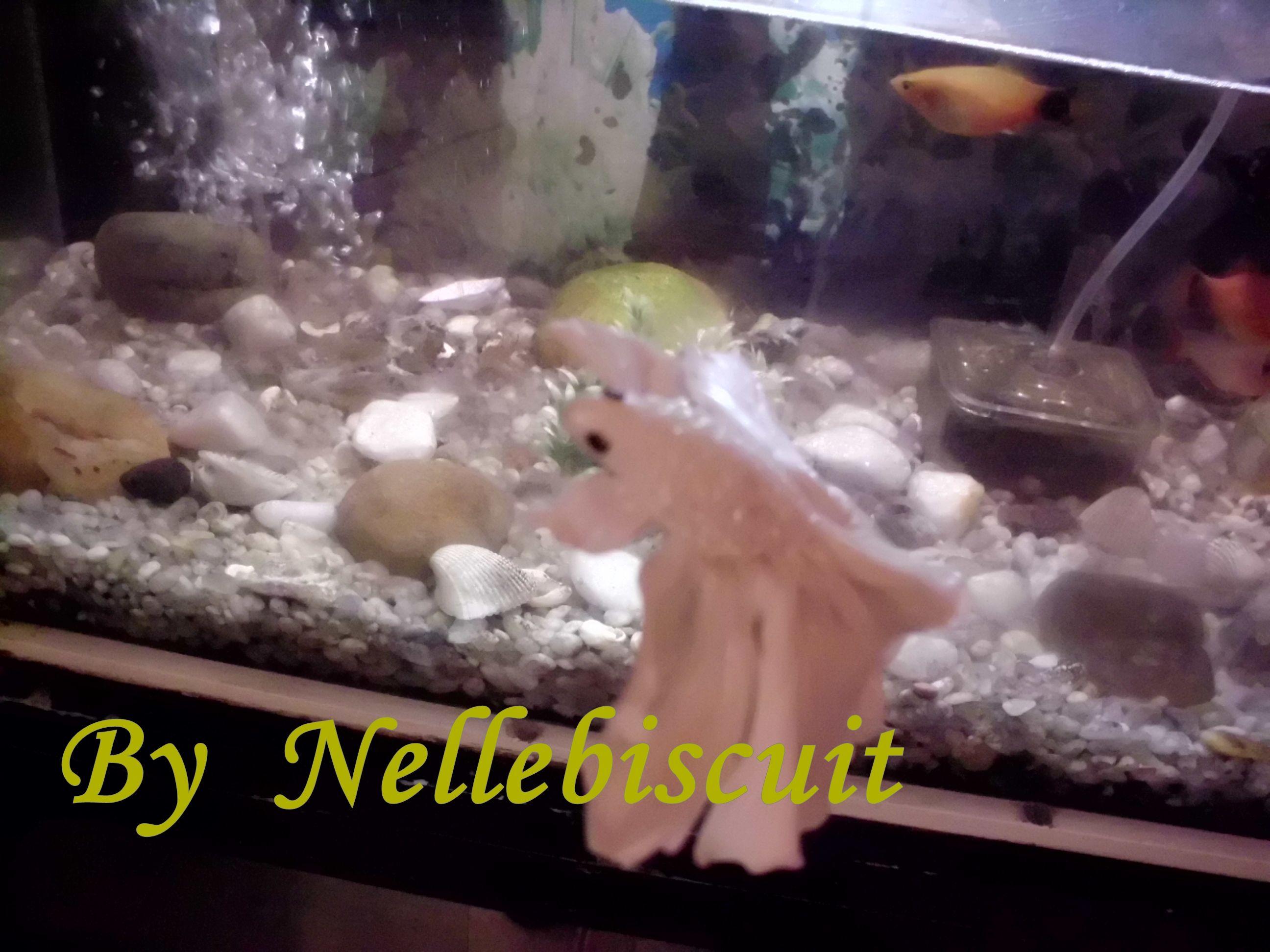 Peixe beta modelada em porcelana fria por Nellebiscuit