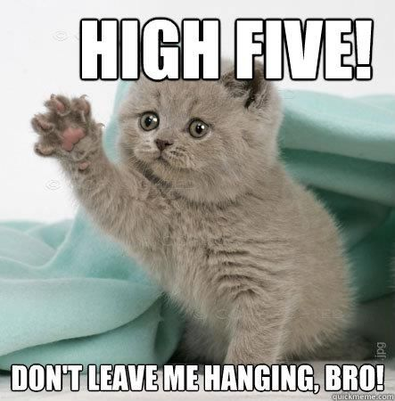 High five! | World's Cutest Animals | Pinterest | Kitty ...