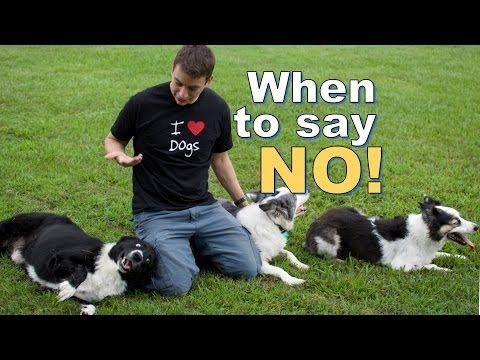 5 Basic Must Teach Commands Dog Training Denver Dogs Dog