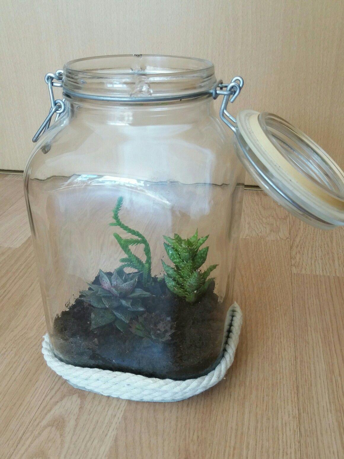 ein glas mit sukkulenten bepflanzt (man kann auch andere pflanzen