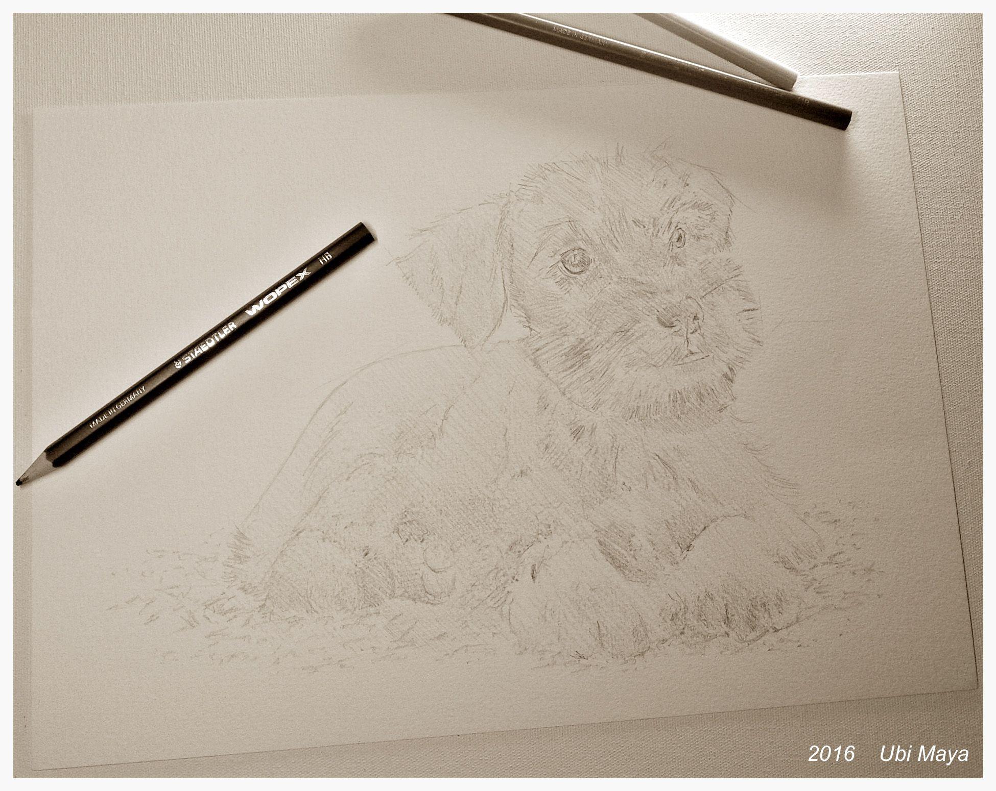 Trilhas para o momento, de: Neil Diamond. Arte encomendada, Desenhando um Schnauzer! https://www.instagram.com/notovitch/