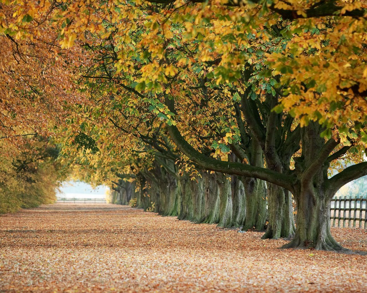 Autumn s concerto wallpaper - Free Autumn Screensavers Wallpaper 1280 1024 Free Fall Screensavers Wallpapers 40 Wallpapers