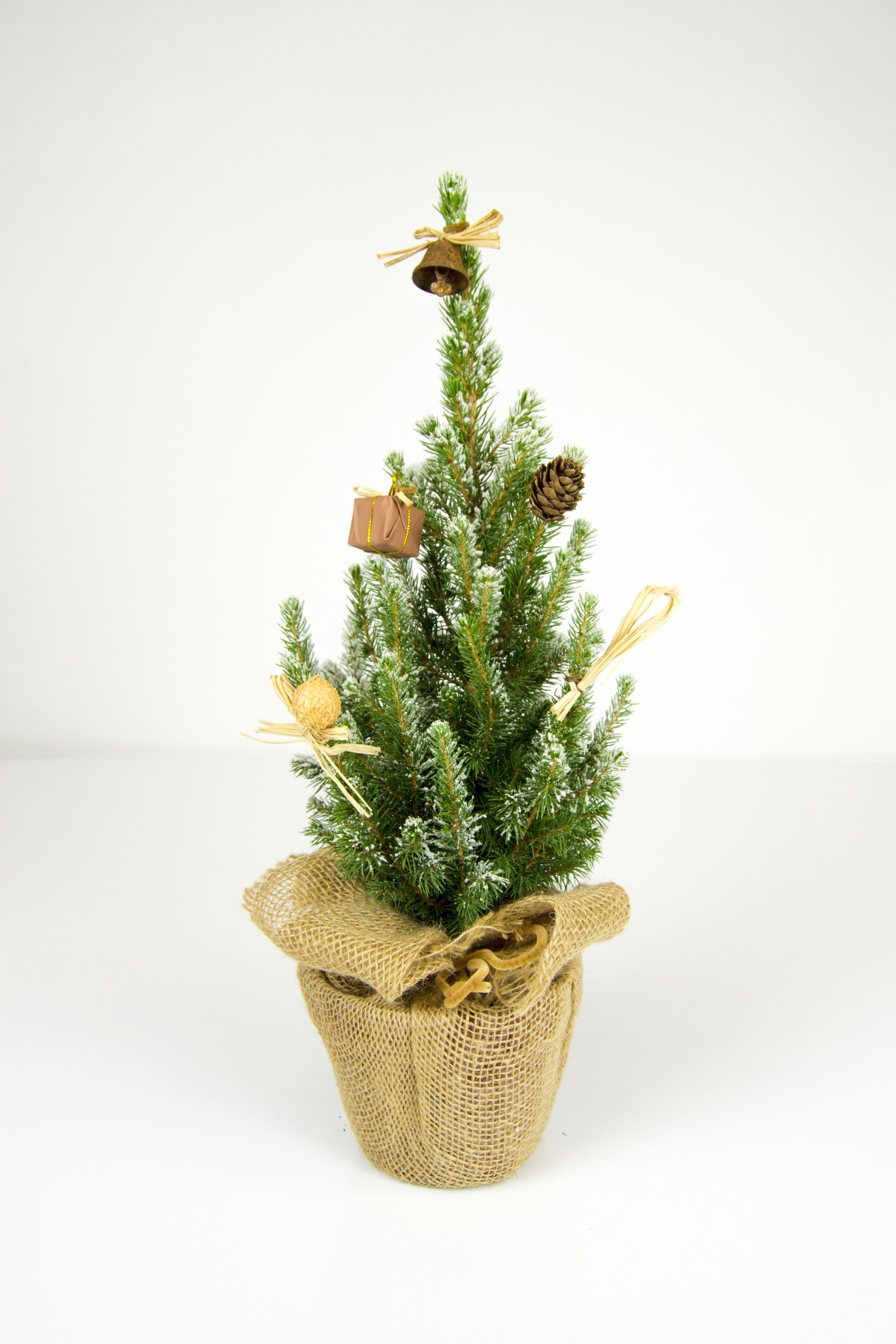 Cute potted Christmas Tree, perfect for your office desk