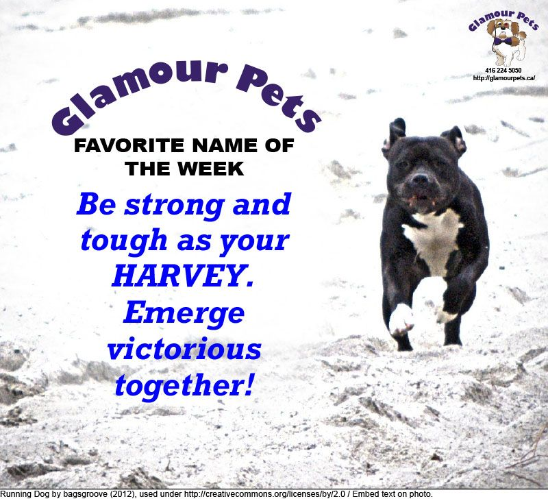 Strong And Victorious Glamour Pets Pet Name Of The Week Dog