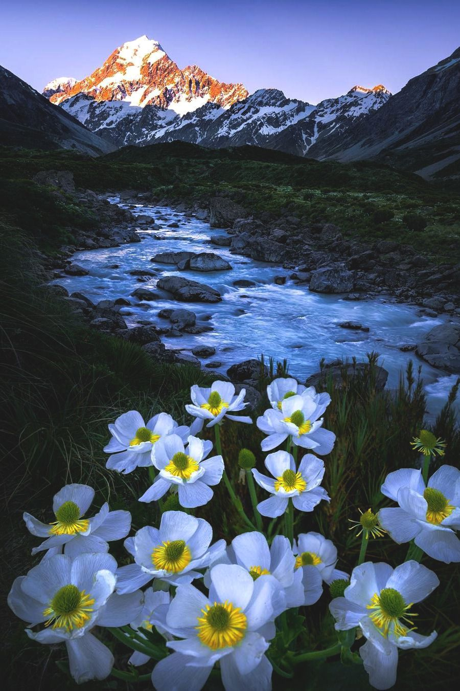 Lsleofskye The Mt Cook Buttercups South Of Home Nature Pictures Beautiful Nature Nature Photography