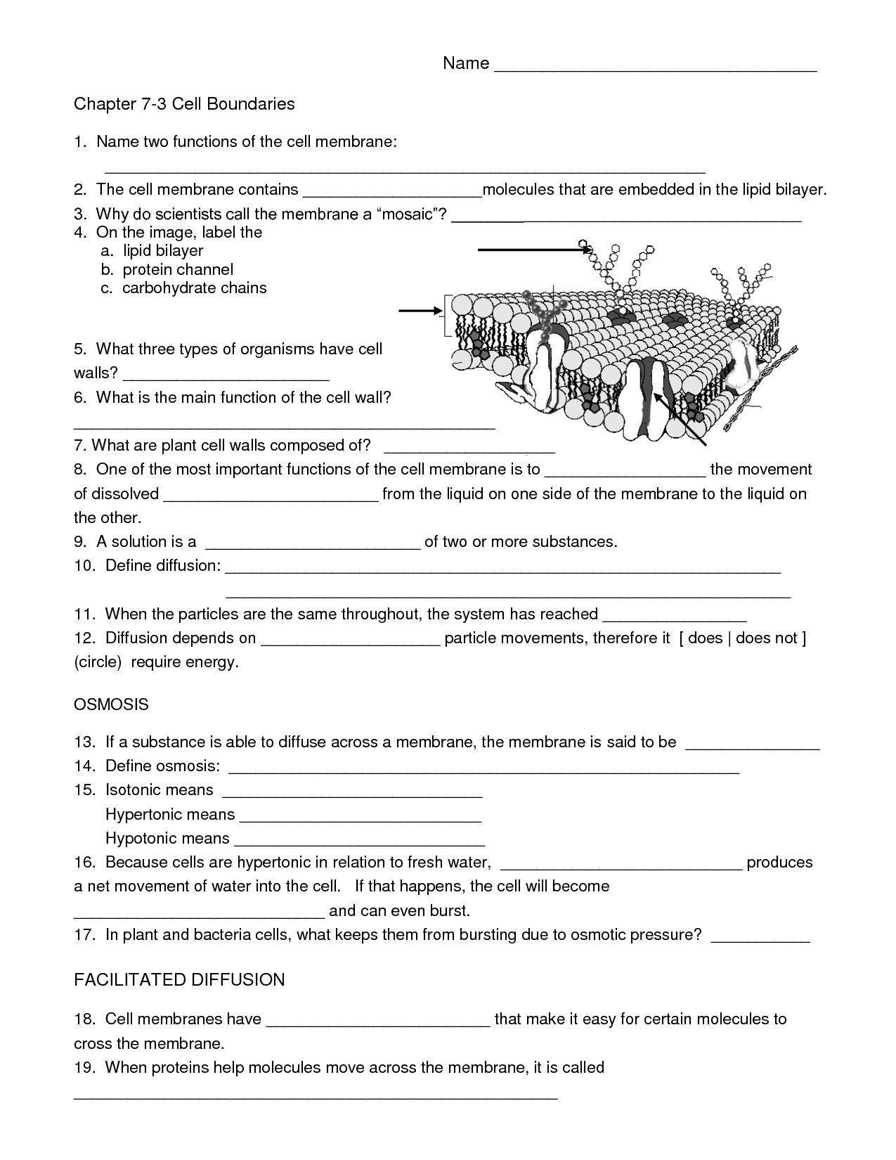 Free Printable Biology Worksheets High School Biology
