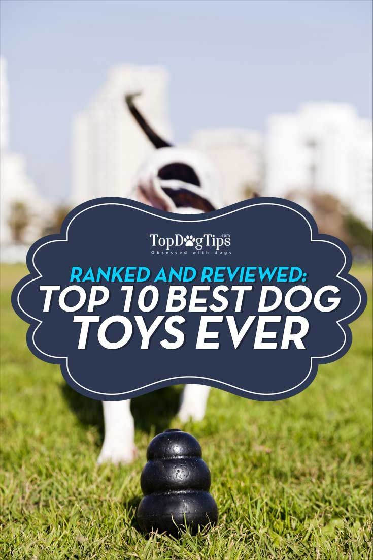 Best Dog Toys 2019 Our Huge Review Of Top 20 Best Toys For Dogs