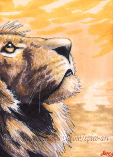 ACEO Original art lion cat wild animals illustration sunrise miniature SMcNeill