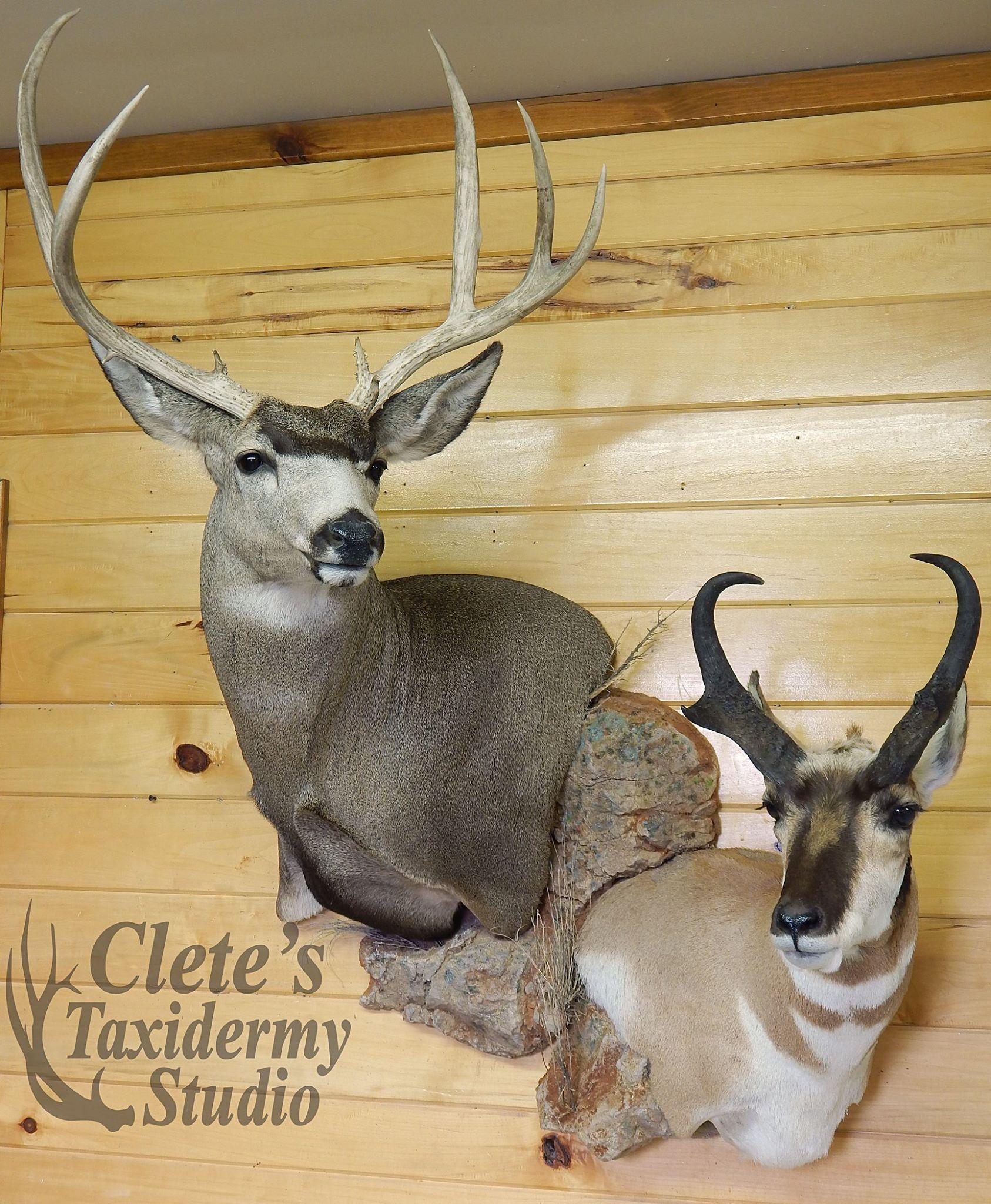 Clete's Taxidermy Studio | Taxidermy art in 2019 | Deer