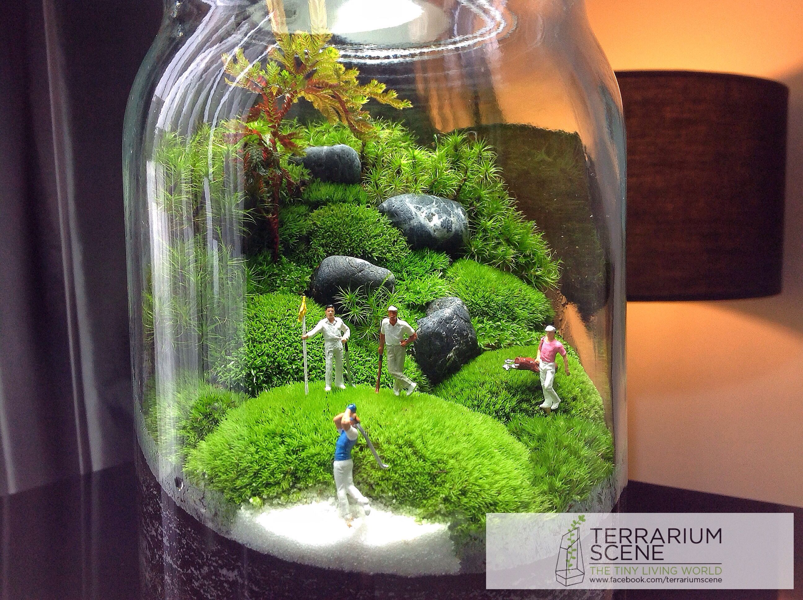 Terrariums cour et jardin pinterest terraria and gardens