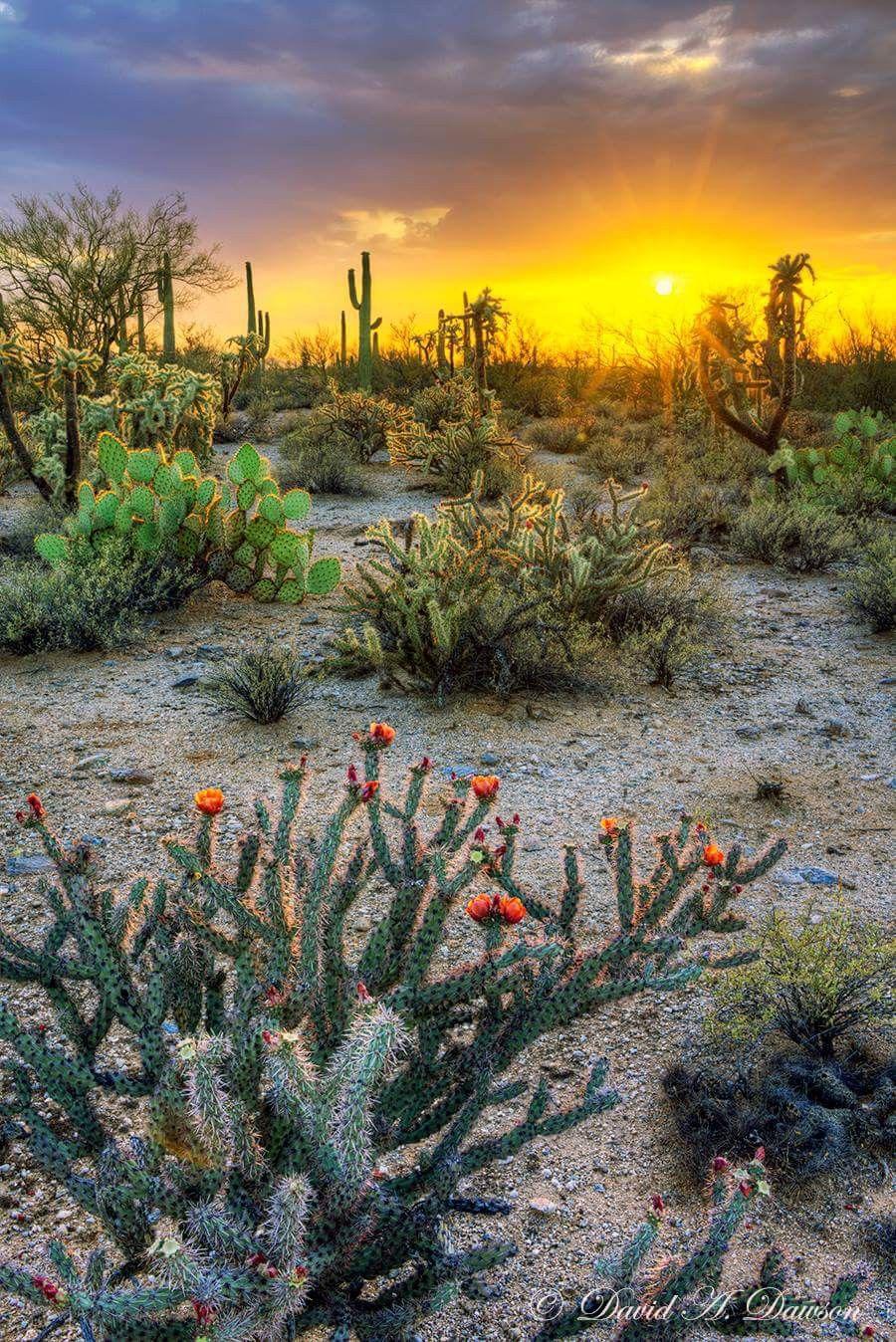 Beautiful Desert Scene Mountain Landscape Photography Desert Pictures Beautiful Landscapes