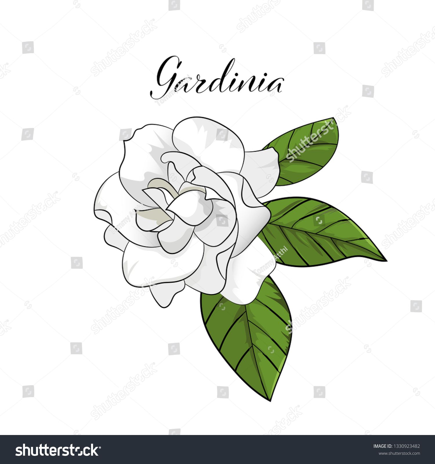 Hand Drawn Gardenia Flower Element Vector Flower Drawing How To Draw Hands Pawprint Tattoo