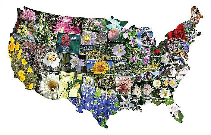 List Of U S State Flowers Wikipedia Tatto Ideas