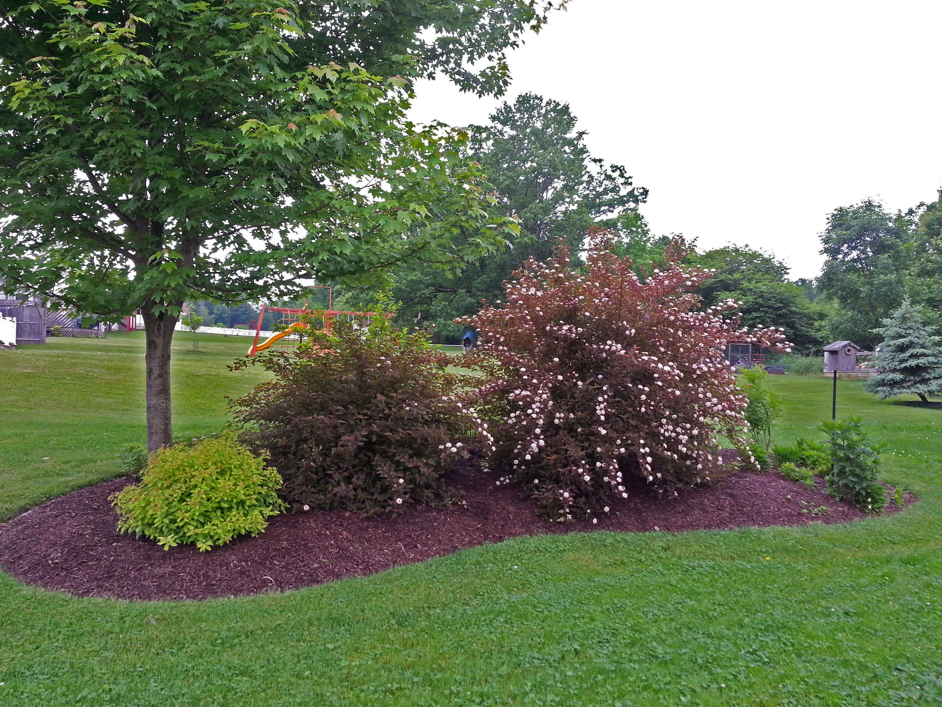 Island berm planting using natives landscaping by for Berm garden designs