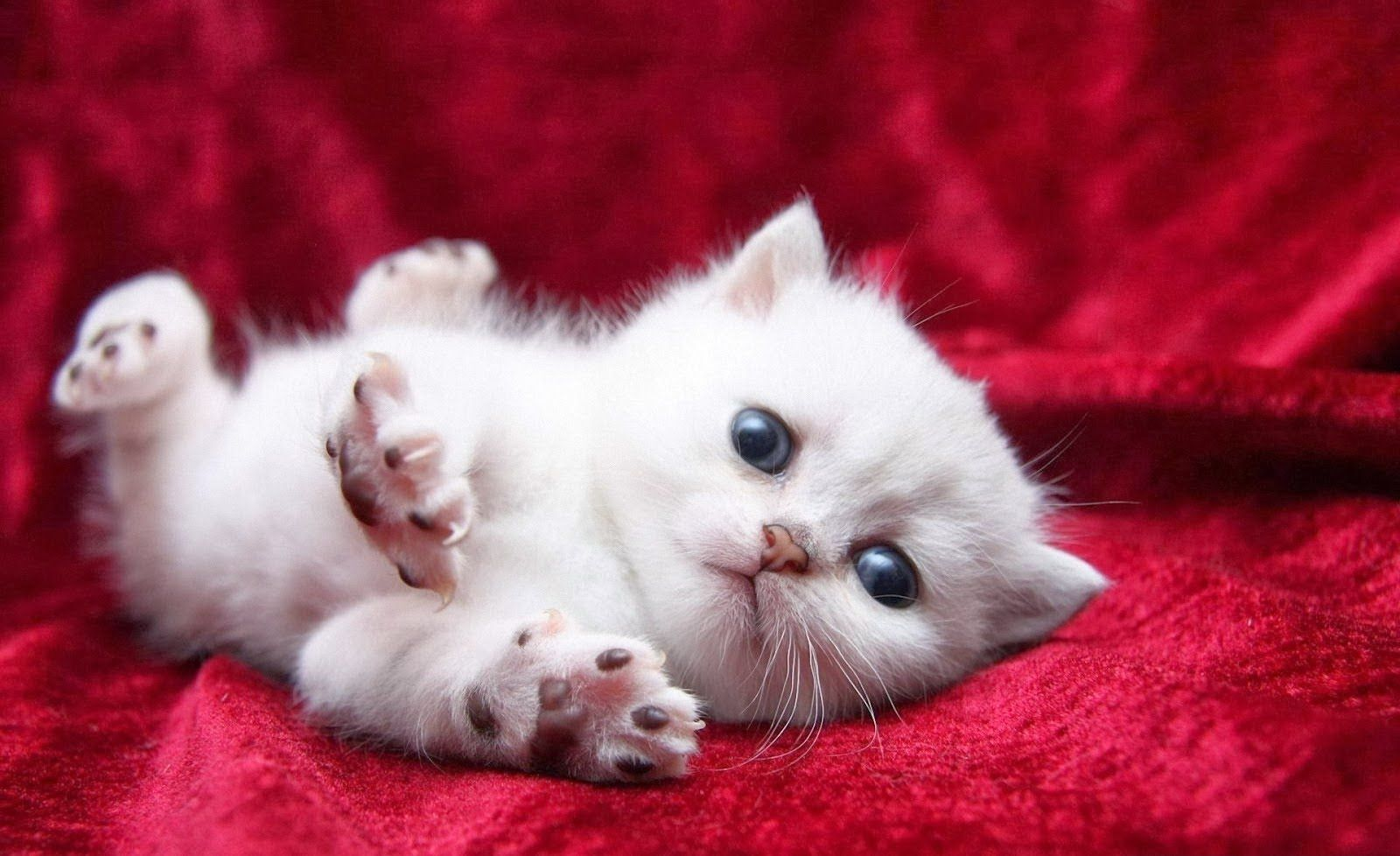 Sweet Cats On Photos Youtube Cute Baby Cats Kittens Cutest