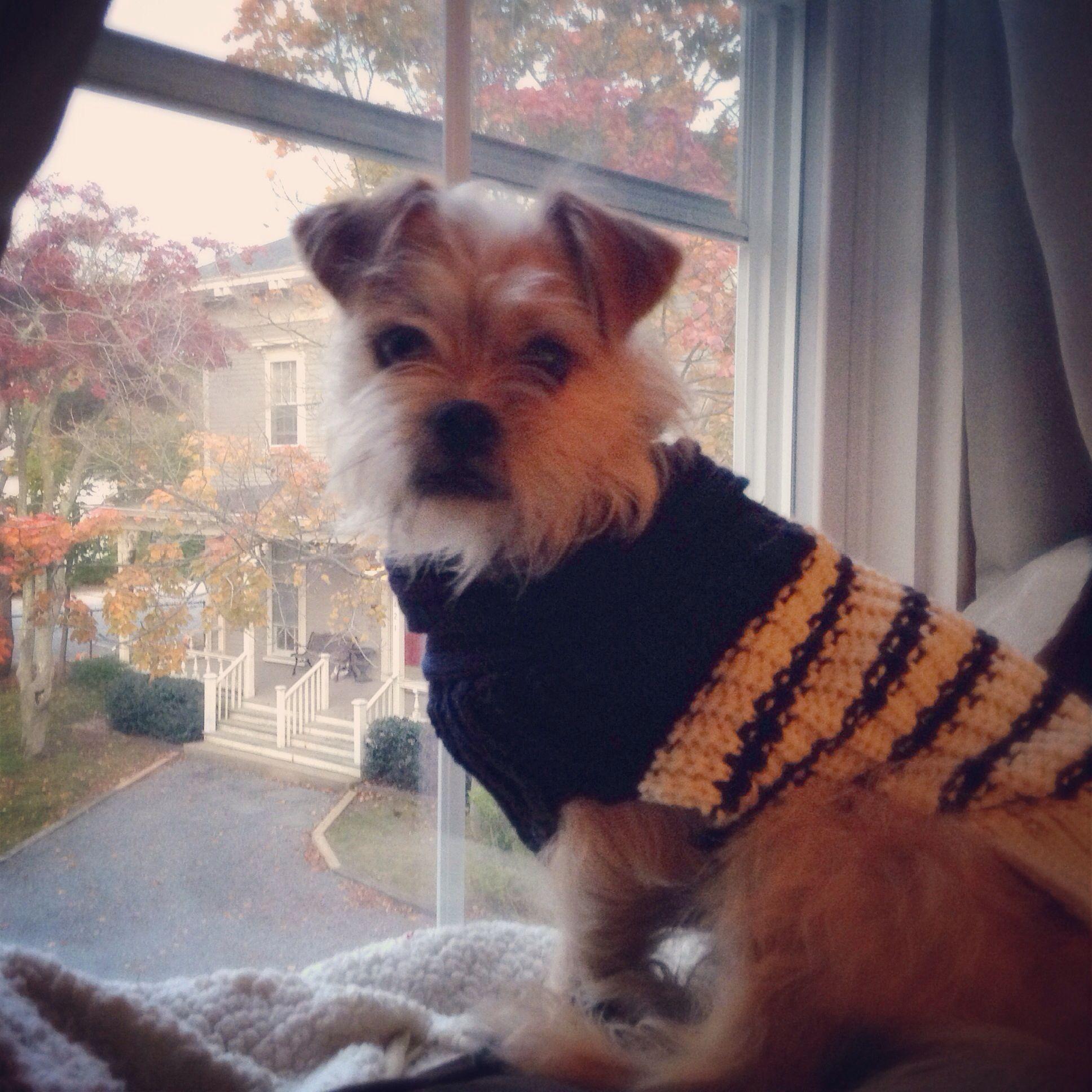 shichi fall Puppy sweaters Murray Arnold