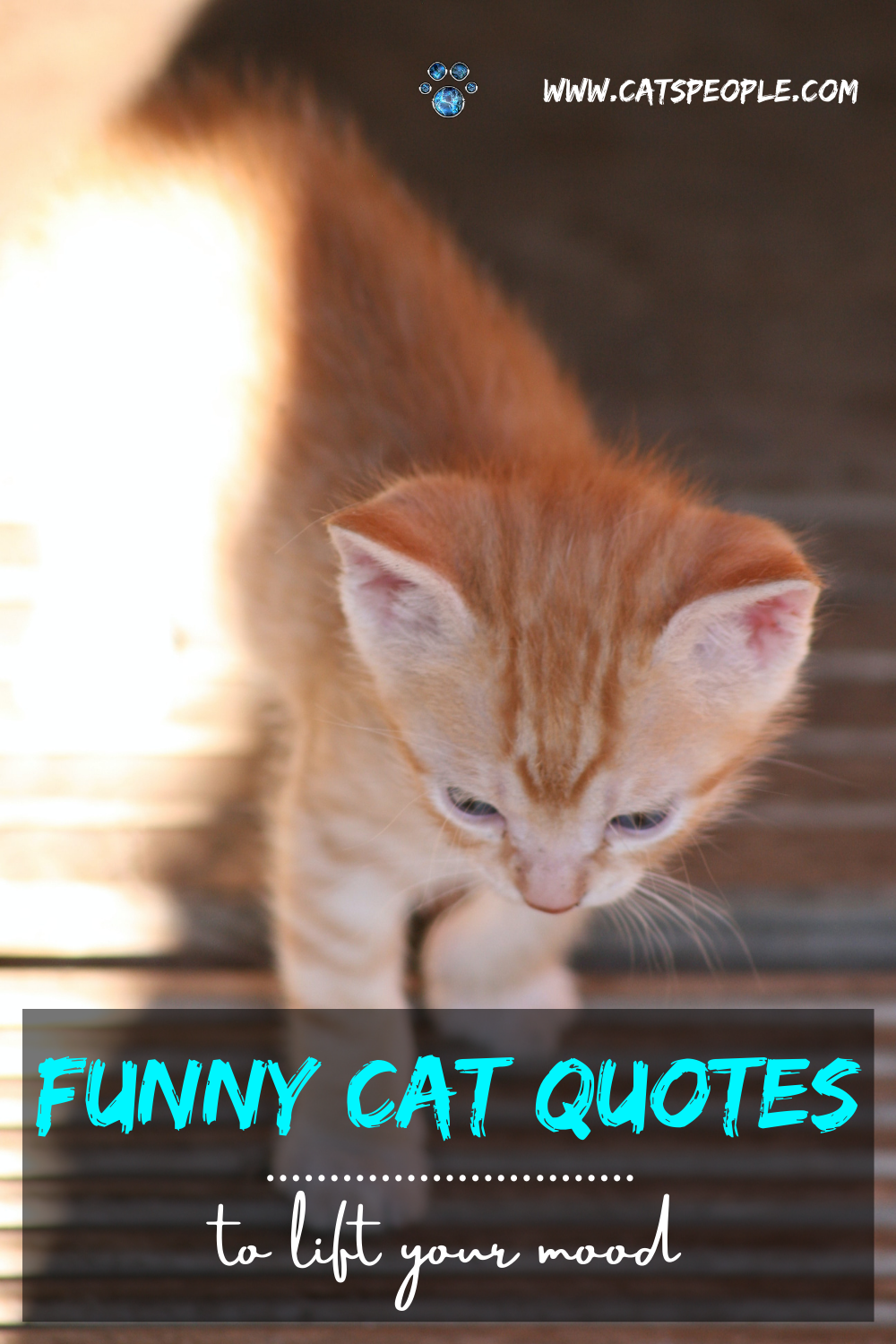 Funny But True Cat Quotes To Make Your Day Brighter Cat Quotes Funny Cat Quotes Cats