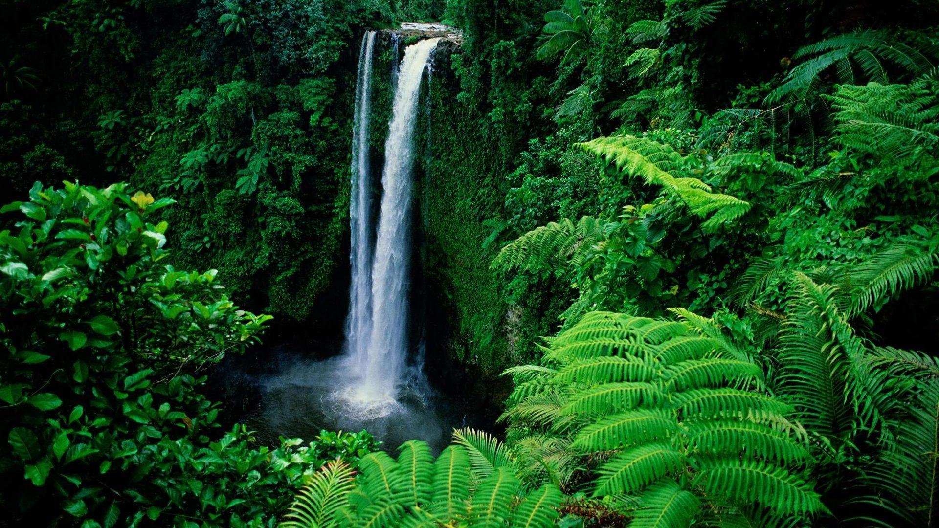 Relaxing For Eyes Waterfall Wallpaper Waterfall Green Nature