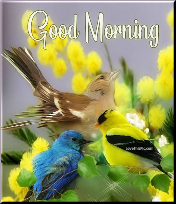 Birds And Flowers Good Morning Wishes Flowers Birds Pretty Good Morning Good Day Spring Good Good Morning Images Latest Good Morning Images Good Morning Wishes