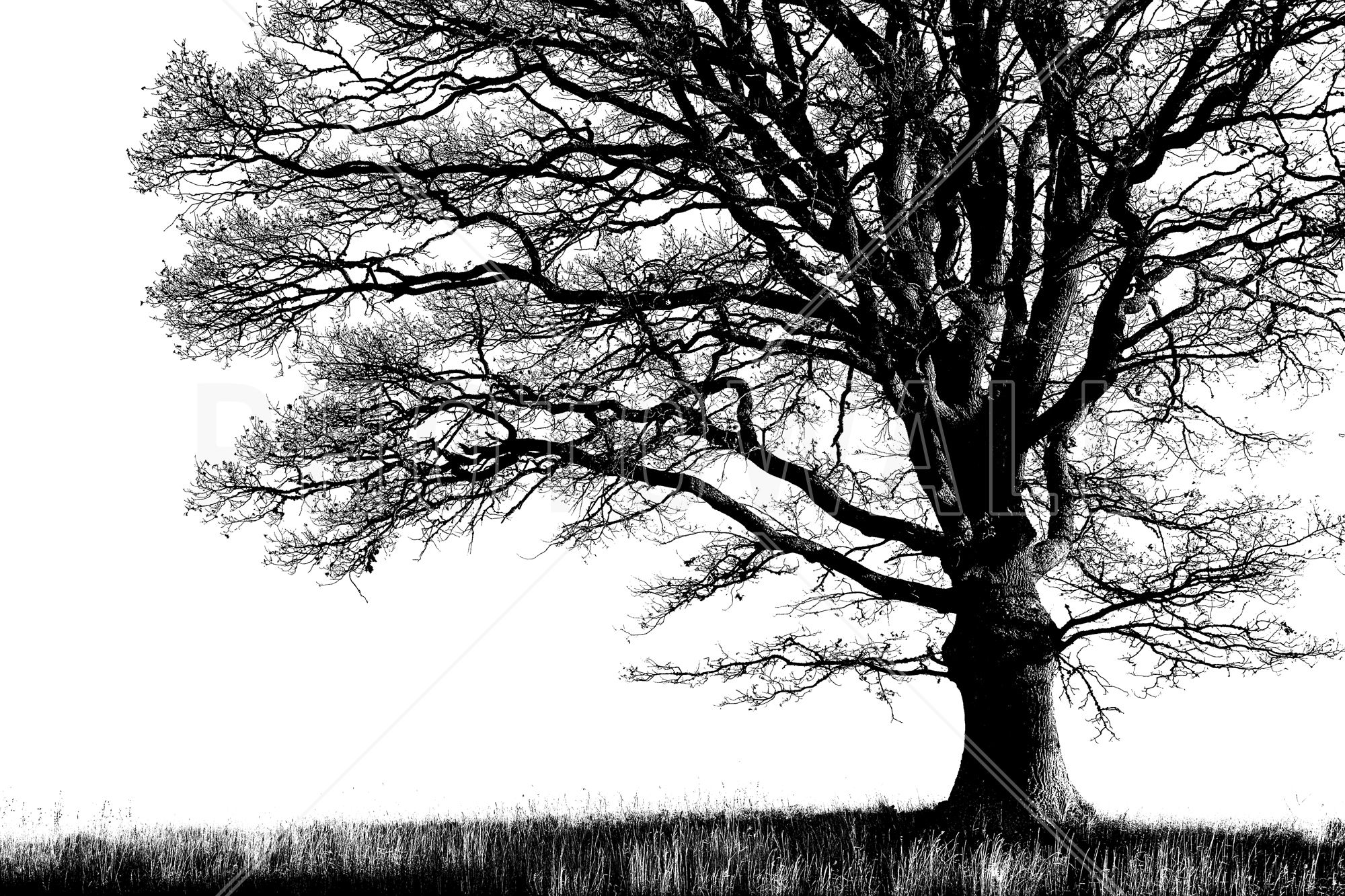 Alone Tree - Tapetit / tapetti - Photowall