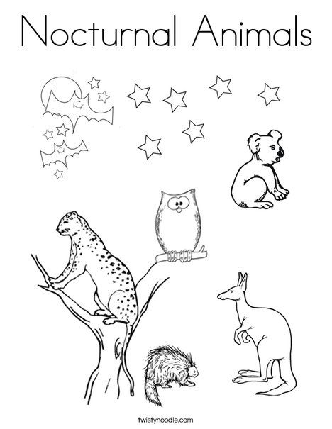 Nocturnal Animals Coloring Page Twisty Noodle Nocturnal