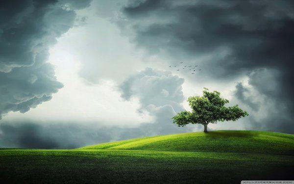 """HANNU on Twitter: """"lone tree on a hill https://t.co/s8jOdKPAIG"""""""
