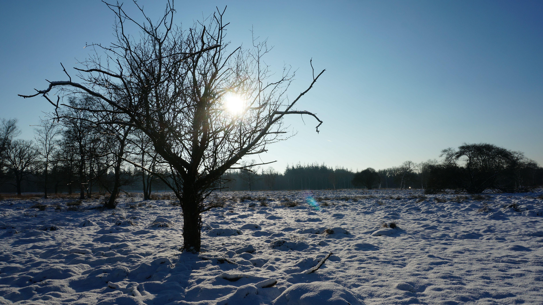 A beautiful walk @ Hoge Veluwe, Netherlands  More about De Hoge Veluwe: https://www.liefdevoorreizen.nl/bestemming/europa/nederland/winterwandeling-bij-nationaal-park-de-hoge-veluwe