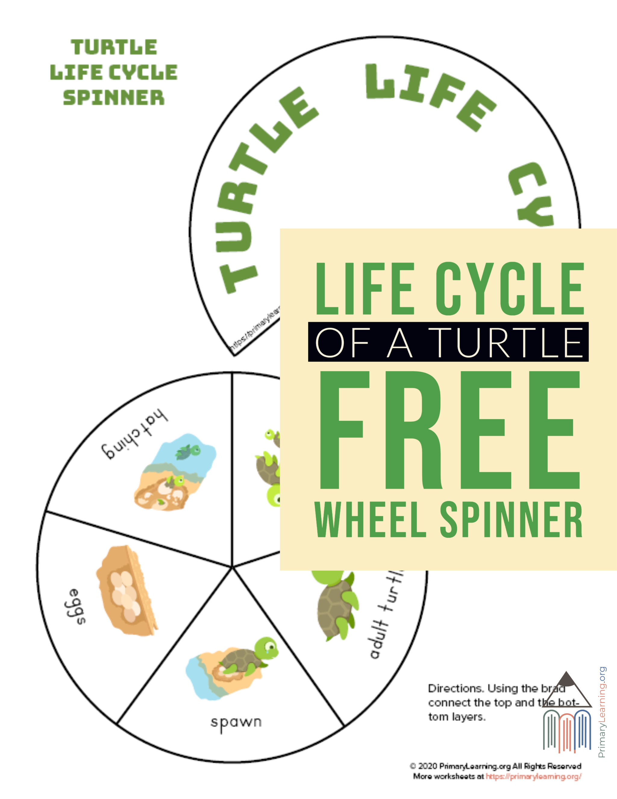 Turtle Life Cycle Spinner