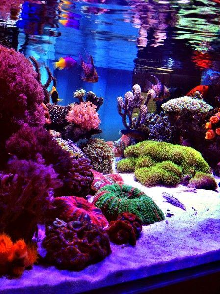 Shallow Illuminated Nano Reefs Gallery Nano Reef Com Forums Aquarium Einrichten Meerwasser Aquarium Salzwasseraquarium