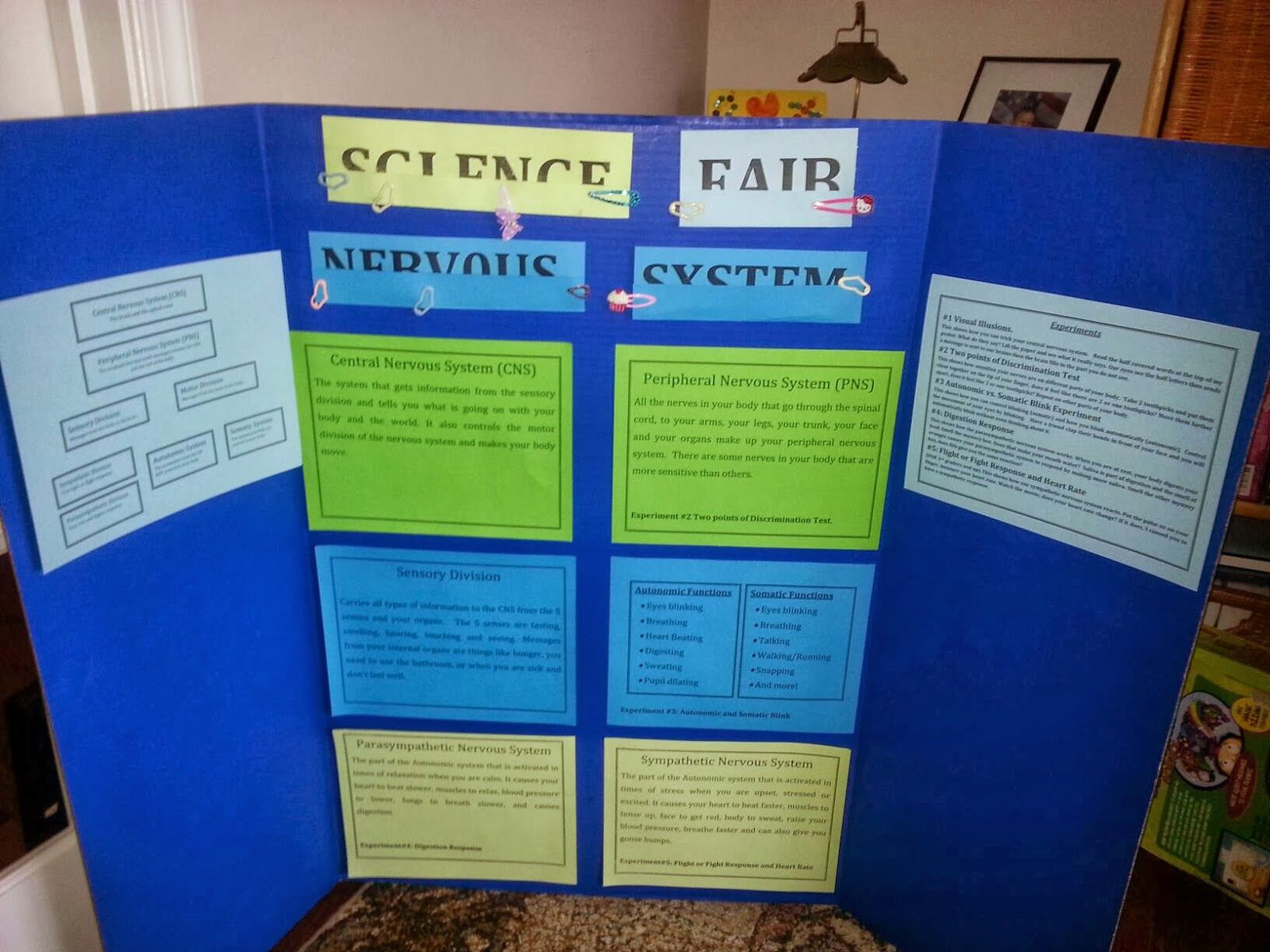 4th Grade Science Fair Nervous System And Infant Reflexes