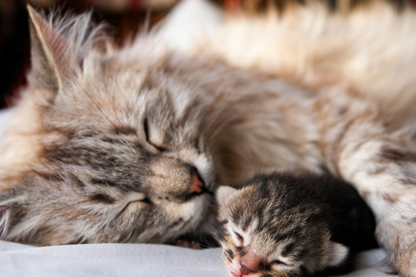 Mother Cat And Kitten Sleeping Sleeping Kitten Kitten Pictures Cats And Kittens
