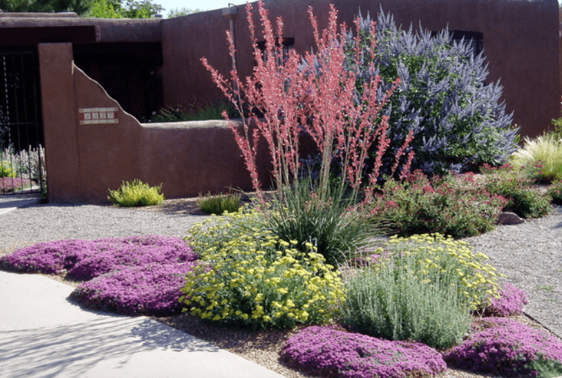 5 drought-tolerant landscaping