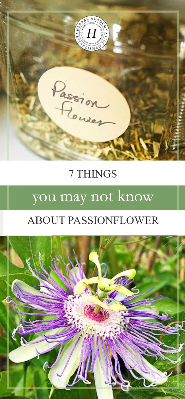 7 Things You May Not Know About Passionflower Herbal Academy Do You Know Passionflower Has A Calming And S Passion Flower Passion Flower Benefits Herbalism