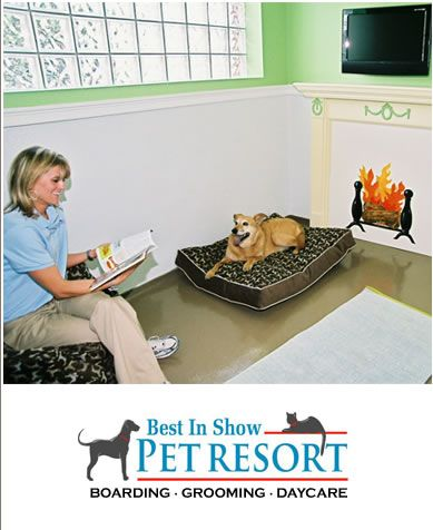 Best In Show Pet Resort Boarding Grooming Doggy Day Care Pet